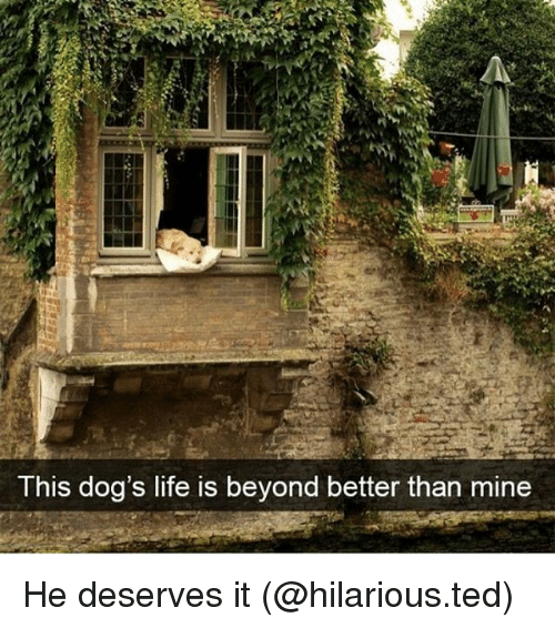 Dogs, Funny, and Life: T his dog's life is beyond better than mine He deserves it (@hilarious.ted)