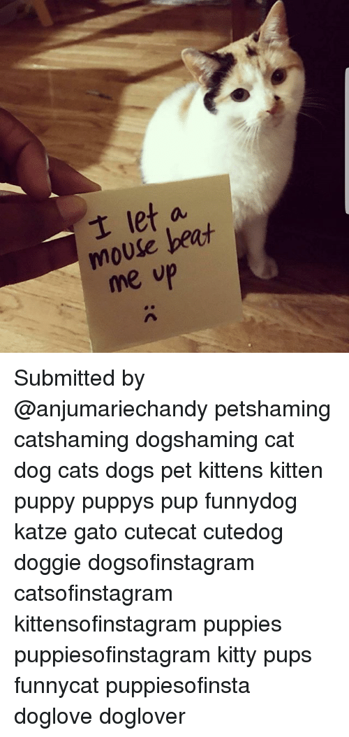 Cats, Dogs, and Memes: t let a  mouse beat  me vp Submitted by @anjumariechandy petshaming catshaming dogshaming cat dog cats dogs pet kittens kitten puppy puppys pup funnydog katze gato cutecat cutedog doggie dogsofinstagram catsofinstagram kittensofinstagram puppies puppiesofinstagram kitty pups funnycat puppiesofinsta doglove doglover