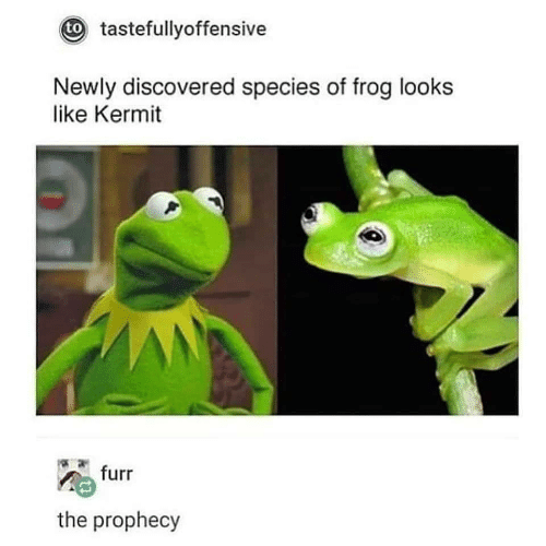 The Prophecy, Species, and Frog: t tastefullyoffensive  Newly discovered species of frog looks  like Kermit  furr  the prophecy