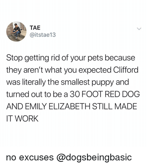 Memes, Work, and Pets: TAE  @itstae13  Stop getting rid of your pets because  they aren't what you expected Clifford  was literally the smallest puppy and  turned out to be a 30 FOOT RED DOG  AND EMILY ELIZABETH STILL MADE  IT WORK no excuses @dogsbeingbasic