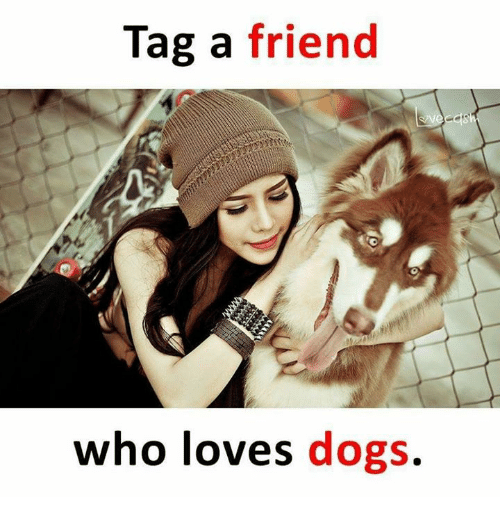 Dogs, Memes, and 🤖: Tag a friend  who loves dogs.