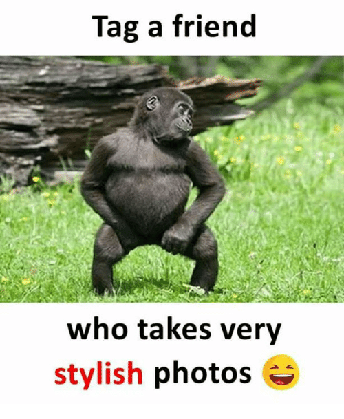 Memes, Stylish, and 🤖: Tag a friend  who takes very  stylish photos
