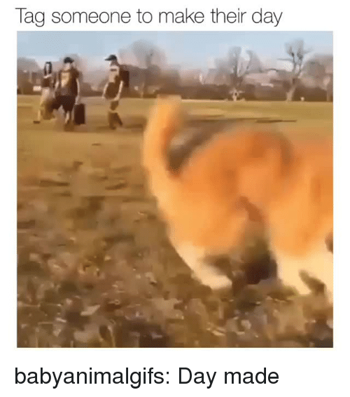 Tumblr, Blog, and Tag Someone: Tag someone to make their day babyanimalgifs:  Day made