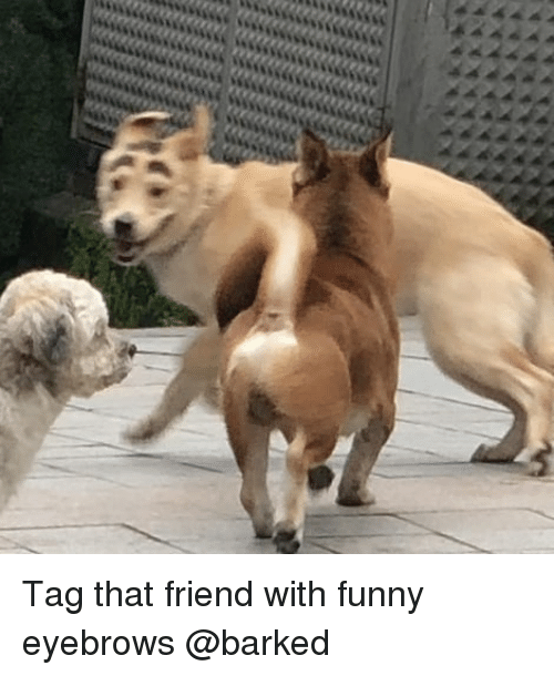 Funny, Memes, and 🤖: Tag that friend with funny eyebrows @barked
