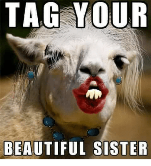 Memes  F0 9f A4 96 And Sisters Tag Your Beautiful Sister