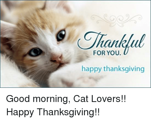 Tahu For You Happy Thanksgiving Good Morning Cat Lovers Happy