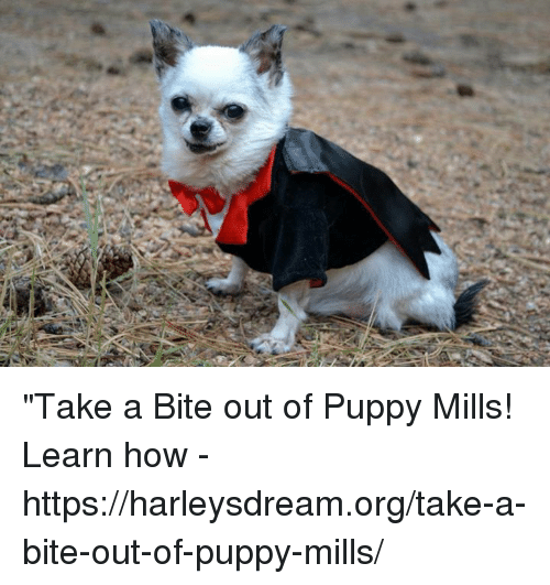 Take a Bite Out of Puppy Mills! Learn How - Httpsharleysdreamorgtake