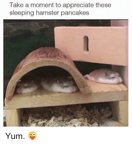 Appreciate, Hamster, and Sleeping: Take a moment to appreciate these  sleeping hamster pancakes