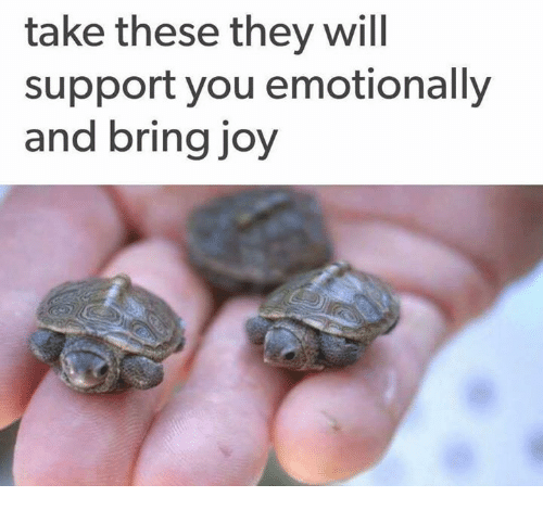 Joy, Will, and They: take these they will  support you emotionally  and bring joy