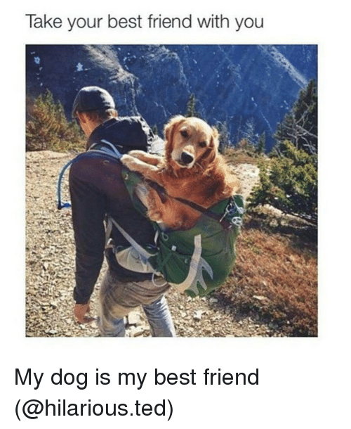 My Best Friend Funny Meme : Take your best friend with you my dog is