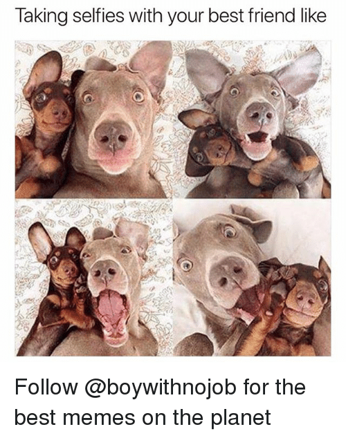 Best Friend, Funny, and Memes: Taking selfies with your best friend like Follow @boywithnojob for the best memes on the planet