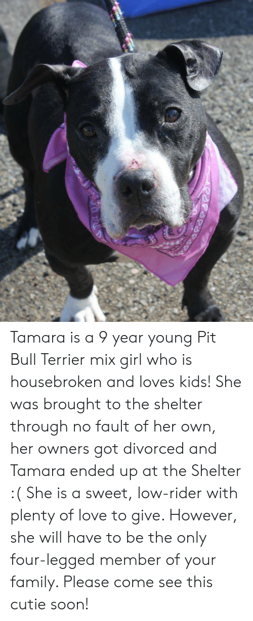 Family, Love, and Memes: Tamara is a 9 year young Pit Bull Terrier mix girl who is housebroken and loves kids! She was brought to the shelter through no fault of her own, her owners got divorced and Tamara ended up at the Shelter :( She is a sweet, low-rider with plenty of love to give. However, she will have to be the only four-legged member of your family. Please come see this cutie soon!