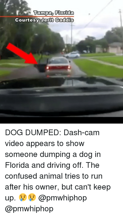 Confused, Driving, and Memes: Tampa, Florida  Courtesy er i t Gaddis DOG DUMPED: Dash-cam video appears to show someone dumping a dog in Florida and driving off. The confused animal tries to run after his owner, but can't keep up. 😢😢 @pmwhiphop @pmwhiphop