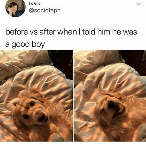 Dank, Good, and Boy: tams  @sociotaph  before vs after when I told him he was  a good boy