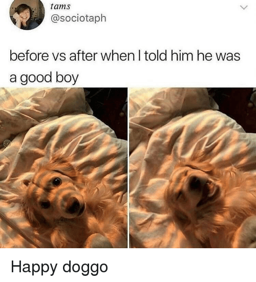 Good, Happy, and Boy: tams  @sociotaph  before vs after when I told him he was  a good boy Happy doggo
