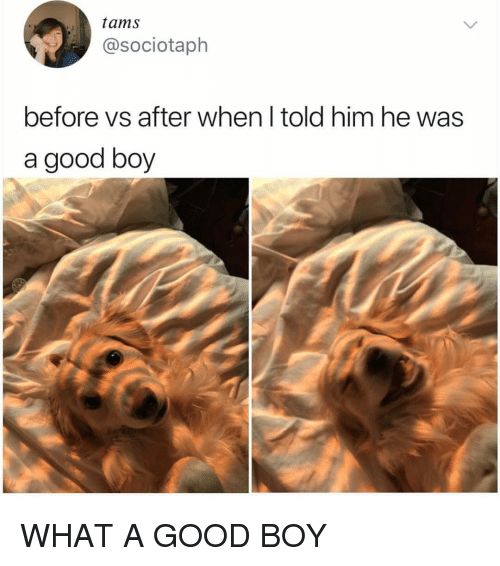 Memes, Good, and Boy: tams  @sociotaph  before vs after when l told him he was  a good boy WHAT A GOOD BOY