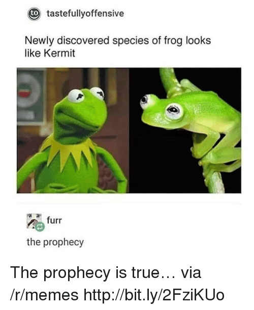 Memes, True, and Http: tastefullyoffensive  to  Newly discovered species of frog looks  like Kermit  furr  the prophecy The prophecy is true… via /r/memes http://bit.ly/2FziKUo