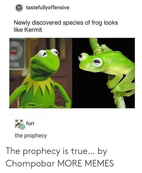 Dank, Memes, and Target: tastefullyoffensive  to  Newly discovered species of frog looks  like Kermit  furr  the prophecy The prophecy is true… by Chompobar MORE MEMES