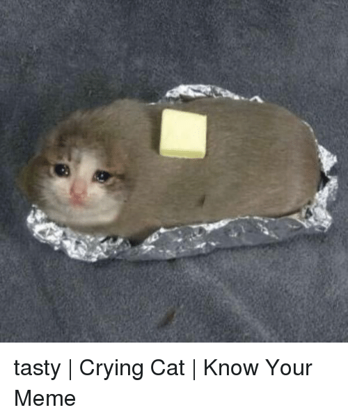 Tasty Crying Cat Know Your Meme Crying Meme On Me Me