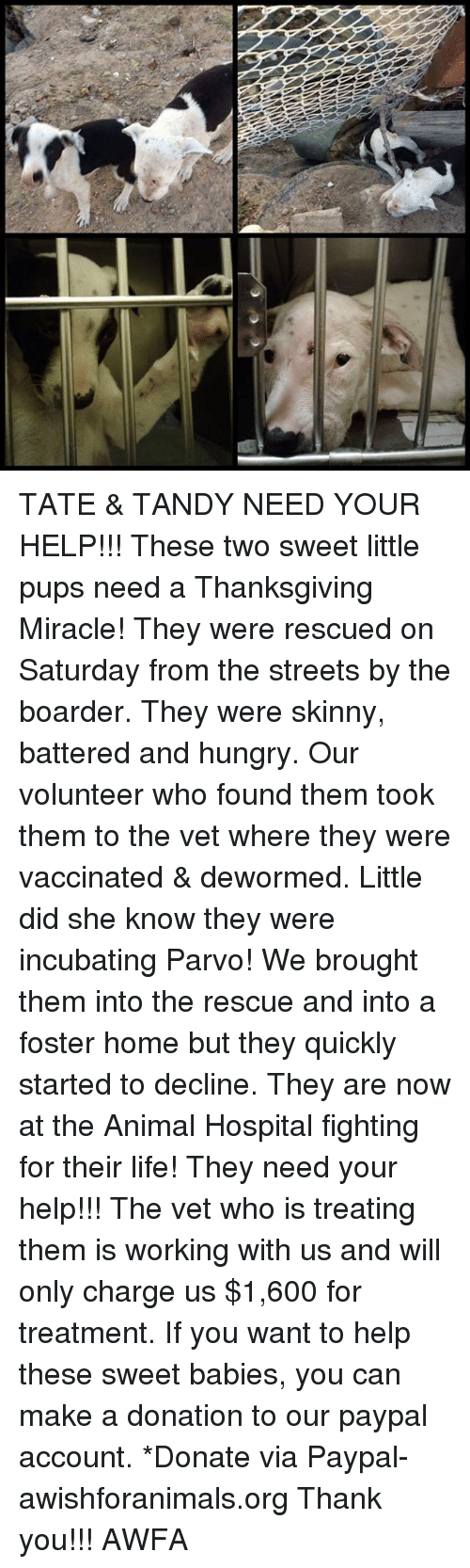 A Thanksgiving Miracle