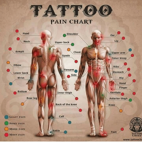 Tattoo pain chart head shoulder ear neck upper back armpit for Inner arm tattoos pain