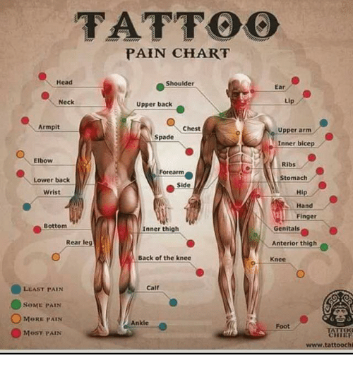 Tattoo Pain Chart Head Shoulder Ear Neck Upper Back Armpit Chest