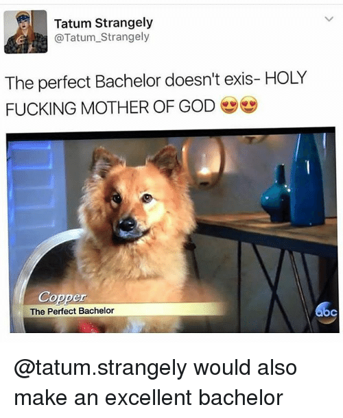 Fucking, God, and Memes: Tatum Strangely  @Tatum_Strangely  The perfect Bachelor doesn't exis- HOLY  FUCKING MOTHER OF GOD  Copper  The Perfect Bachelor  oc @tatum.strangely would also make an excellent bachelor