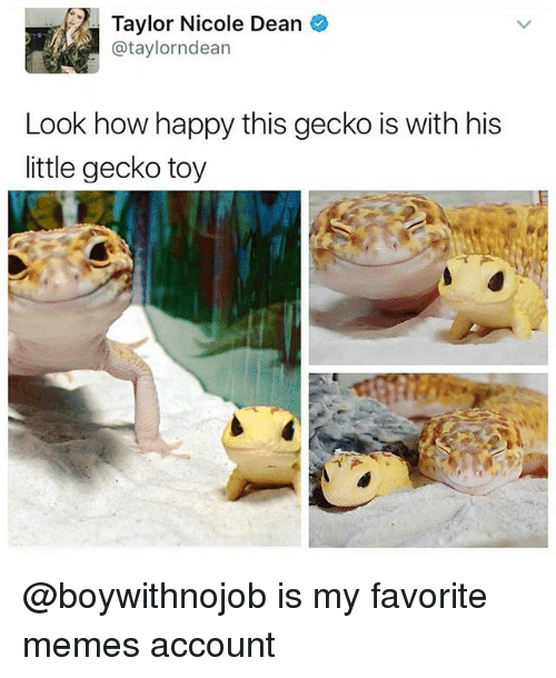 Funny Gecko Memes Of 2017 On Me.me