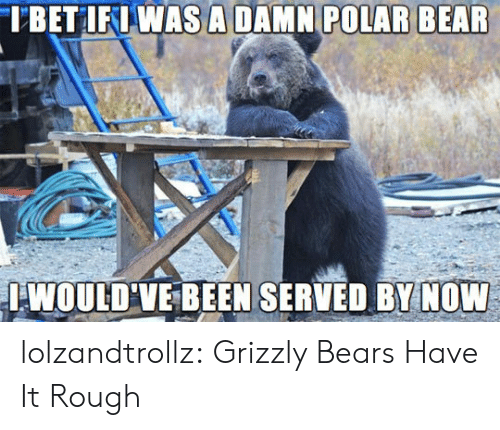 Tumblr, Bear, and Bears: TBET IFIWAS A DAMN POLAR BEAR  IWOULD VE BEEN SERVED BY NOW lolzandtrollz:  Grizzly Bears Have It Rough
