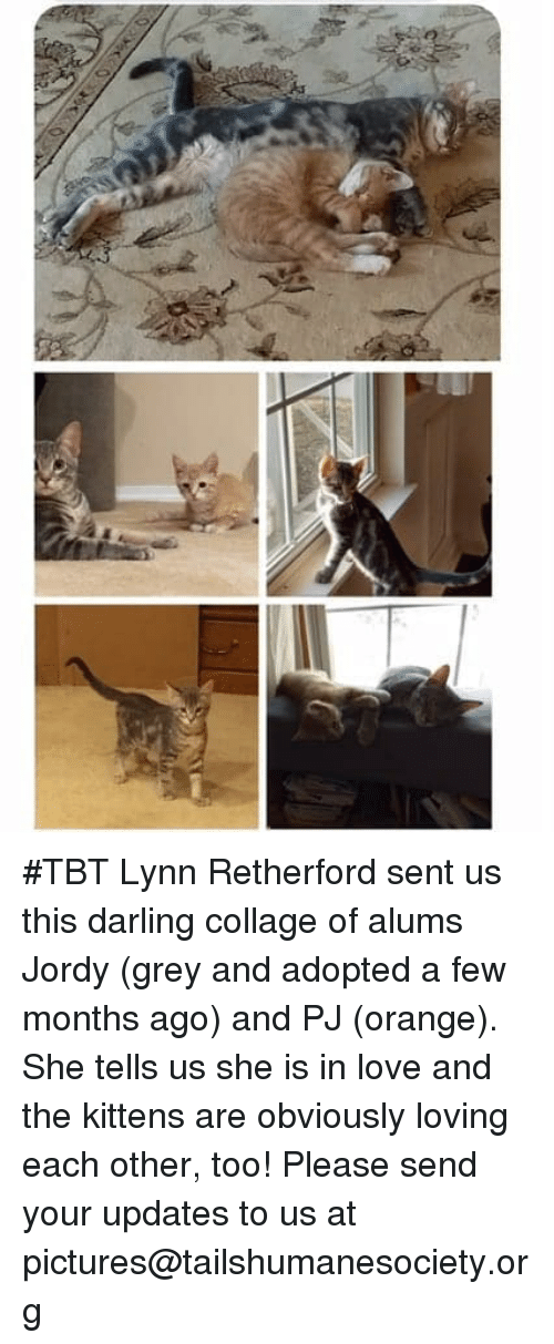 Love, Memes, and Tbt: #TBT Lynn Retherford sent us this darling collage of alums Jordy (grey and adopted a few months ago) and PJ (orange). She tells us she is in love and the kittens are obviously loving each other, too! Please send your updates to us at pictures@tailshumanesociety.org
