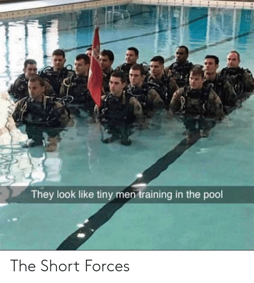 Pool, Tiny, and They: tc  They look like tiny men training in the pool The Short Forces