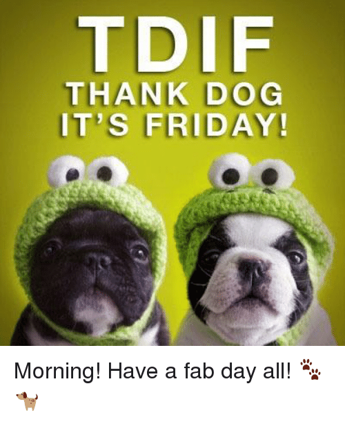 Tdif Thank Dog Its Friday Morning Have A Fab Day All Dogs