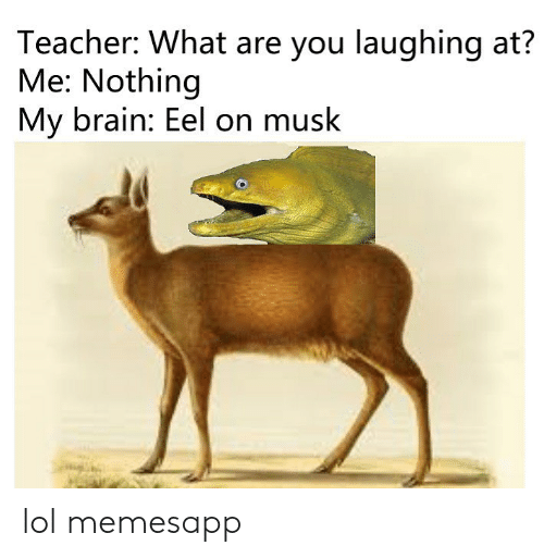 Lol, Memes, and Teacher: Teacher: What are you laughing at?  Me: Nothing  My brain: Eel on musk lol memesapp