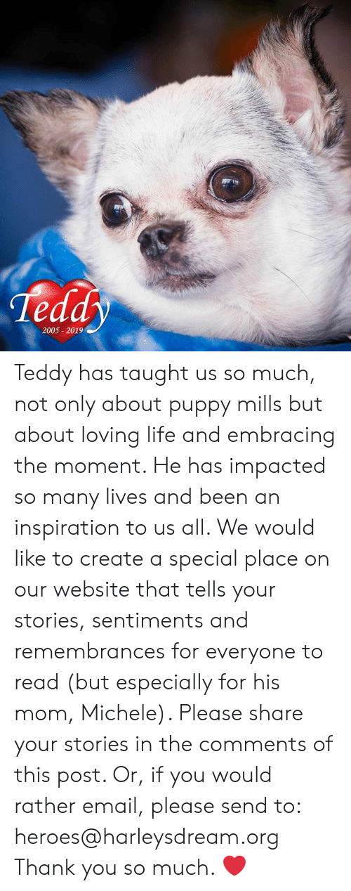 Life, Memes, and Thank You: Teddy  2005 2019 Teddy has taught us so much, not only about puppy mills but about loving life and embracing the moment. He has impacted so many lives and been an inspiration to us all. We would like to create a special place on our website that tells your stories, sentiments and remembrances for everyone to read (but especially for his mom, Michele). Please share your stories in the comments of this post. Or, if you would rather email, please send to: heroes@harleysdream.org  Thank you so much. ❤️