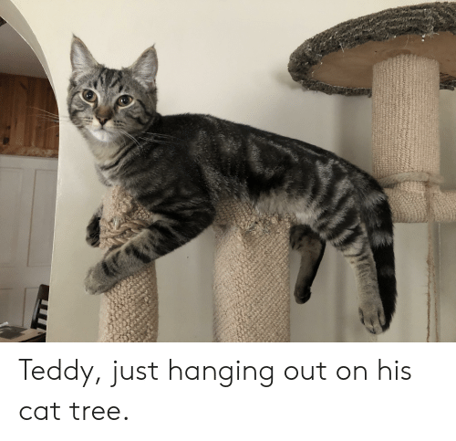 Tree, Cat, and Just: Teddy, just hanging out on his cat tree.