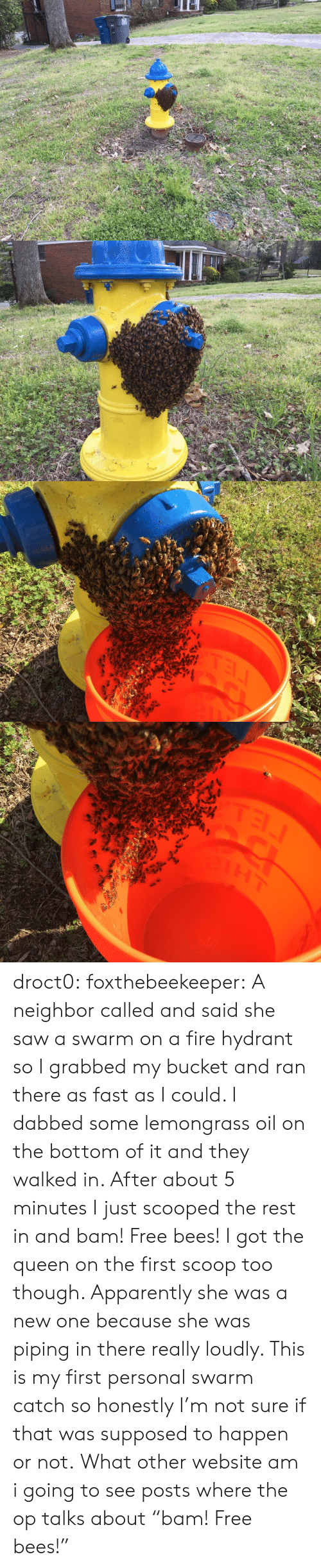 """Apparently, Fire, and Saw: TEL droct0: foxthebeekeeper:  A neighbor called and said she saw a swarm on a fire hydrant so I grabbed my bucket and ran there as fast as I could. I dabbed some lemongrass oil on the bottom of it and they walked in. After about 5 minutes I just scooped the rest in and bam! Free bees!  I got the queen on the first scoop too though. Apparently she was a new one because she was piping in there really loudly. This is my first personal swarm catch so honestly I'm not sure if that was supposed to happen or not.   What other website am i going to see posts where the op talks about """"bam! Free bees!"""""""