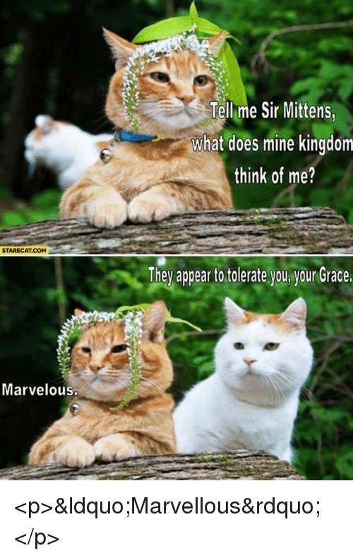 """What Does, Marvelous, and Kingdom: Tell me Sir Mittens  what does mine kingdom  think of me?  STARECAT.COM  They appea to tolerate you ygur Grace  Marvelous <p>""""Marvellous""""</p>"""