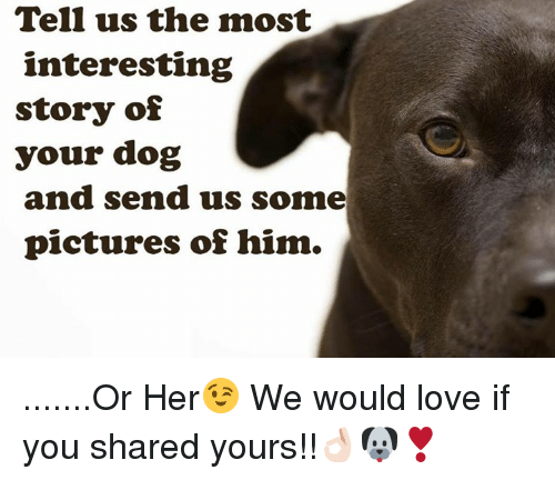 Tell Us the Most Interesting Story of Your Dog and Send Us Some