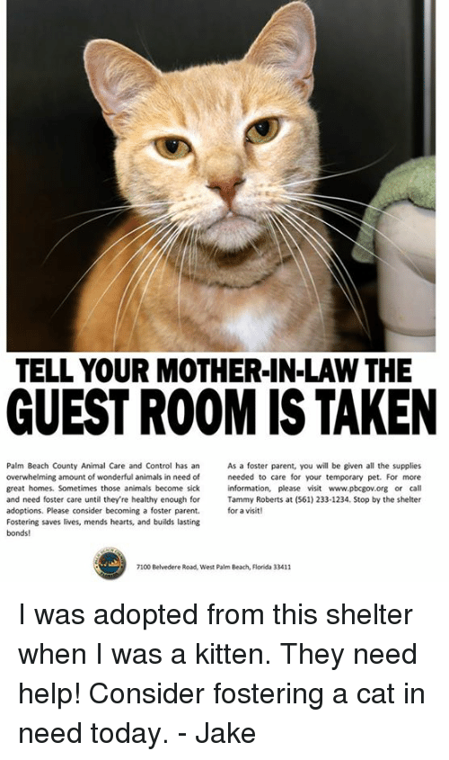 Tell Your Mother In Law The Guestroom Is Taken Palm Beach County
