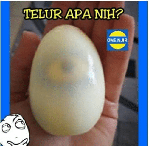 Indonesian (Language), One, and Apa: TELUR APA NIH?  ONE NJIR