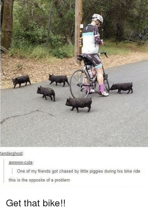 Cute, Friends, and Bike: tenderghost  awwww-cute  One of my friends got chased by little piggies during his bike ride  this is the opposite of a problem Get that bike!!