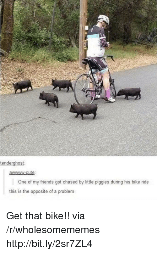 Cute, Friends, and Http: tenderghost  awwww-cute  One of my friends got chased by little piggies during his bike ride  this is the opposite of a problem Get that bike!! via /r/wholesomememes http://bit.ly/2sr7ZL4
