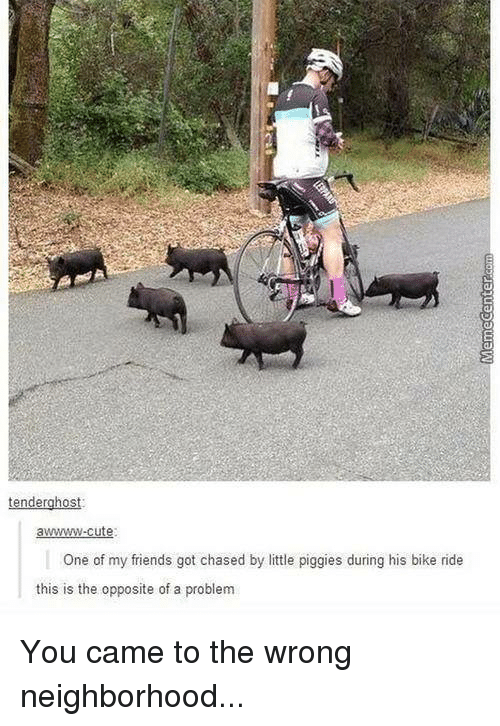 Cute, Friends, and Memes: tenderghost:  awwwwww-cute  One of my friends got chased by little piggies during his bike ride  this is the opposite of a problem You came to the wrong neighborhood...