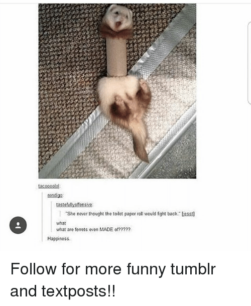 Funny, Memes, and Tumblr: tendigo  She never thought the toilet paper roll would fight back liesst  what  what are ferrets even MADE of?2??7  Happiness Follow for more funny tumblr and textposts!!