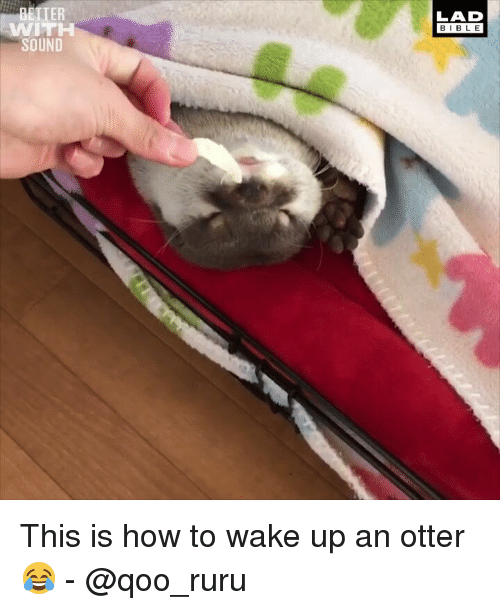 Memes, Bible, and How To: TER  LAD  BIBLE  WITH  SOUND This is how to wake up an otter 😂 - @qoo_ruru