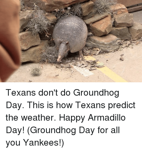 Groundhog Day, Texans, and Texas: Texans don't do Groundhog Day. This is how Texans predict the weather. Happy Armadillo Day! (Groundhog Day for all you Yankees!)