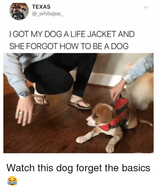 Funny, Life, and How To: TEXAS  @ whitejoe  I GOT MY DOGA LIFE JACKET AND  SHE FORGOT HOW TO BE A DOG Watch this dog forget the basics 😂
