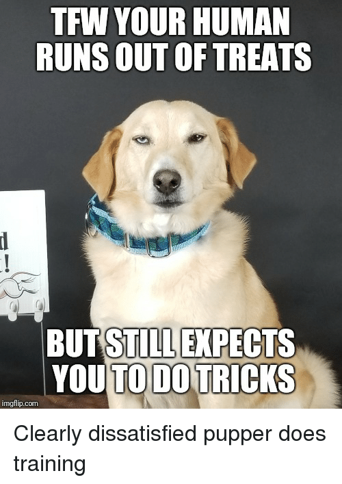 Tfw, Dog, and Human: TFW YOUR HUMAN  RUNS OUT OF TREATS  BUT STILL EXPECT  YOUTO DO TRICKS  imgflip.com Clearly dissatisfied pupper does training