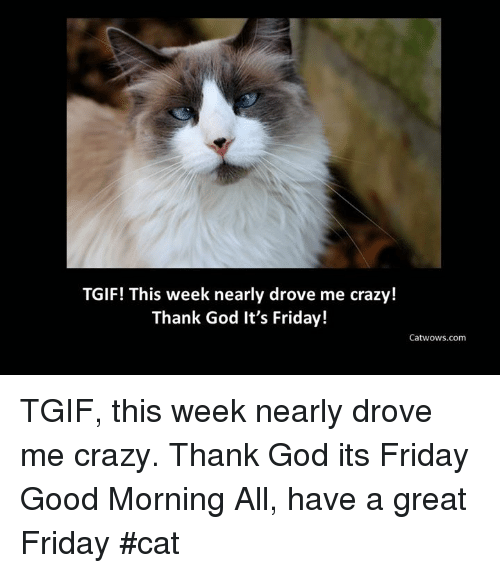 It's Friday, Memes, and Tgif: TGIF! This week nearly drove me crazy!  Thank God It's Friday!  Catwows.com TGIF, this week nearly drove me crazy. Thank God its Friday  Good Morning All, have a great Friday    #cat