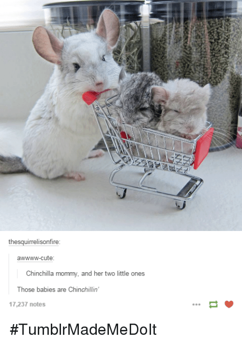 Dank, 🤖, and Chinchilla: th  awwww-cute  Chinchilla mommy, and her two little ones  Those babies are Chinchillin'  17,237 notes #TumblrMadeMeDoIt